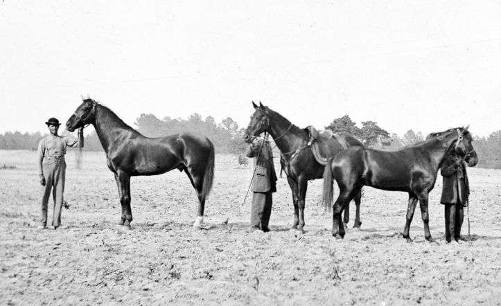 Some of Grant's wartime horses. Cincinnati is in the center